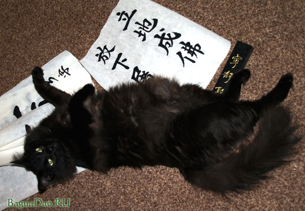 Каллиграфический кот